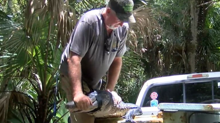 Trapper John Davidson arrived soon afterwards and caught the beast. Pic: WPTV