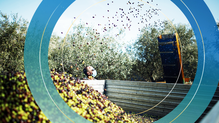 A worker wears a face mask as he checks olives during the annual olive picking in the olive groves of Masseria San Martino, as the spread of the coronavirus disease (COVID-19) continues, in Pezze di Greco, Italy November 6, 2020.
