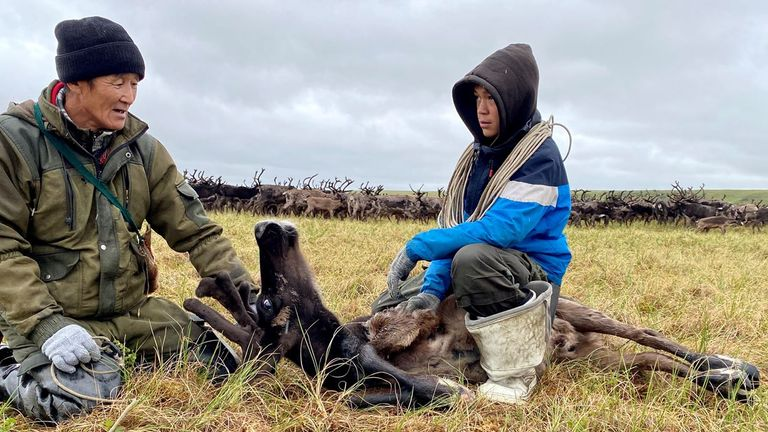 The Chukchi people have been reindeer breeders for generations