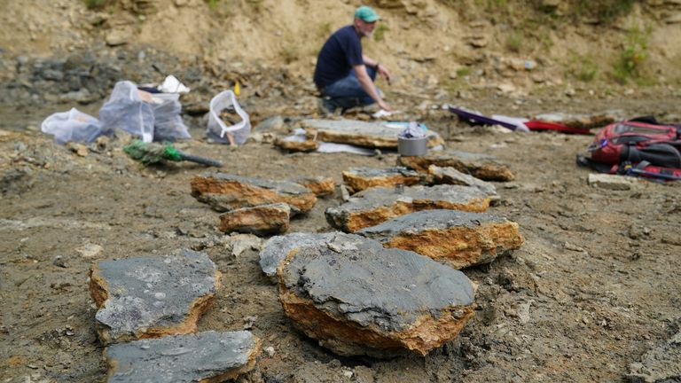 Finds are stored on the ground after being found by paleontologists from the Natural History Museum during a dig in a quarry in the north Cotswolds, where preserved echinoderms, sea lilies and echinoids, dating back to middle Jurassic period, have been found after the site was discovered by Neville and Sally Hollingworth. Picture date: Thursday July 1, 2021.
