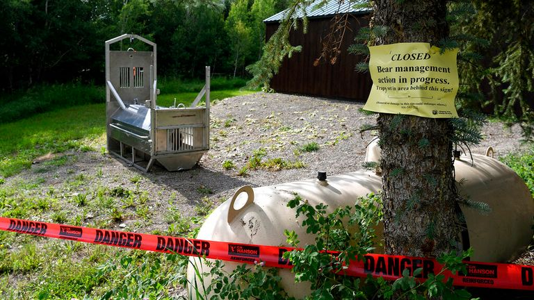 A bear trap was set up in Ovando following the attack. Pic: AP