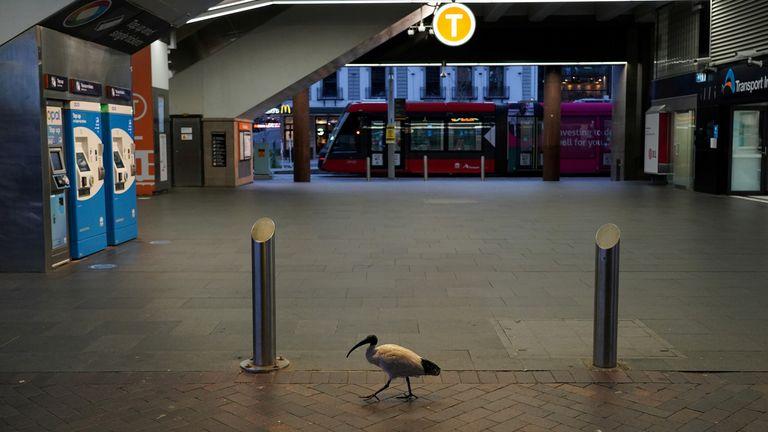 Ein einsamer Vogel passiert den ruhigen Bahnhof Circular Quay während der Schließung, um die Ausbreitung der Coronavirus-Krankheit (COVID-19) in Sydney, Australien, 28. Juli 2021 zu reduzieren. REUTERS/Loren Elliott TPX BILDER DES TAGES