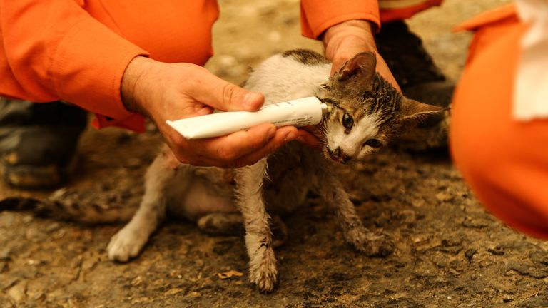 Volunteers treat a cat wounded during a forest fire near the town of Manavgat, east of the resort city of Antalya, Turkey, July 29, 2021. REUTERS/Kaan Soyturk