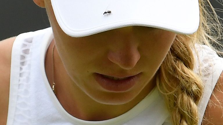 Flying ants have been seen distracting  tennis players at Wimbledon in previous years