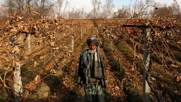 Mohammad Hussain poses for a picture inside his grape farm in Parwan province December 13, 2014.