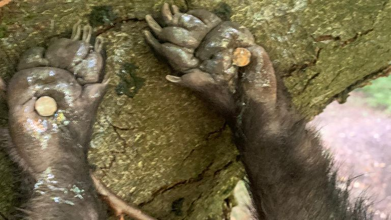 The badger was suspended by its feet around 10ft in the air. Pic: North Wales Police