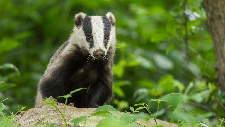 حیوانات تحت قانون حفاظت از گورکن 1992 محافظت می شوند