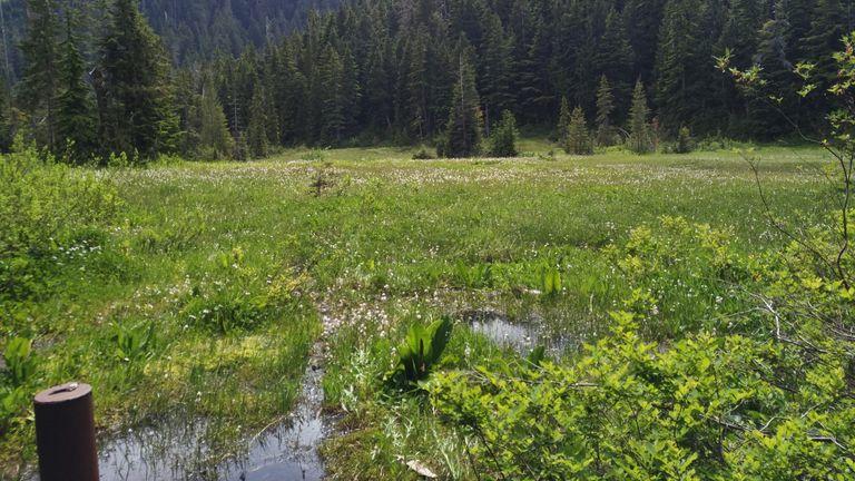 The bog at Cypress Provincial Park. Photo: Dr. Qianshi Lin
