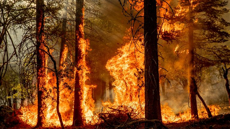 Flames from the Dixie Fire spread in Genesee, California, 21 August. Pic: AP