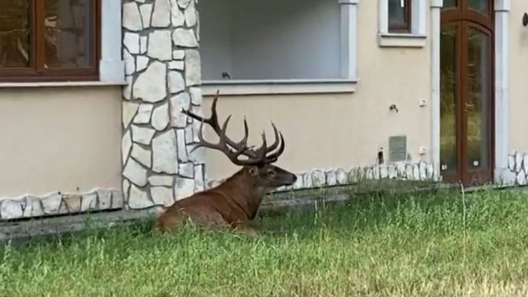 Group of deer take over a holiday home garden in Italy
