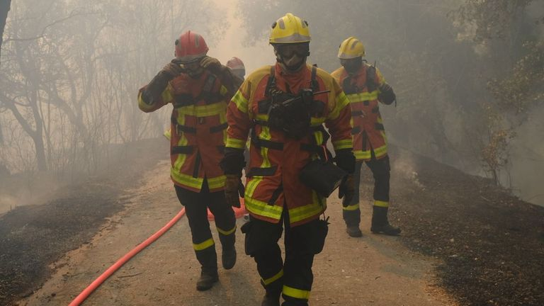 While the fires mainly hit forest areas, some vineyards in the region were also hit