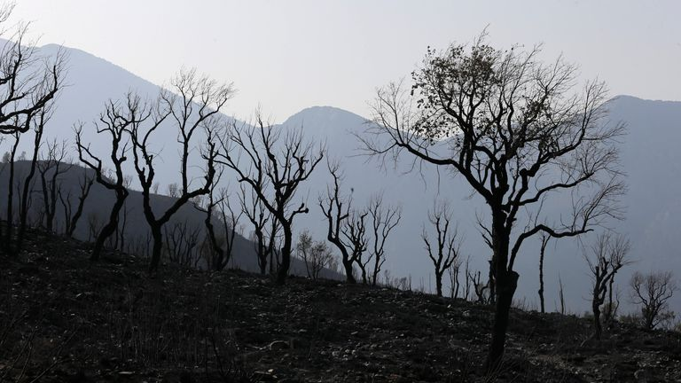 A charred forest is pictured after a fire near the village of Achlouf, in the Kabyle region. Pic: AP