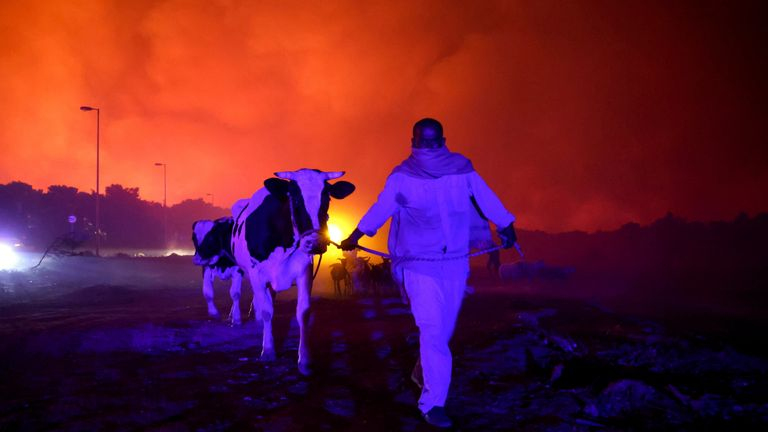 A resident evacuates the area with his animals as a wildfire rages in the suburb of Thrakomakedones, north of Athens