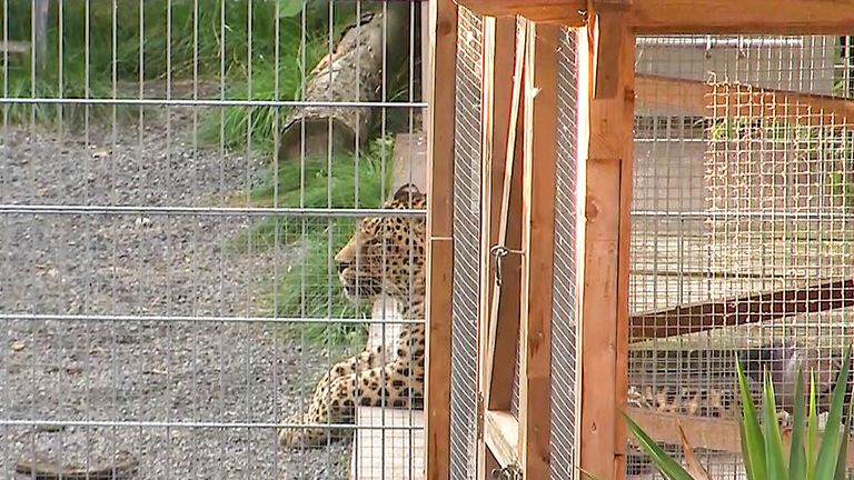 A leopard enclosure in Germany. Pic: Tobias Junghann'/picture-alliance/dpa/AP Images