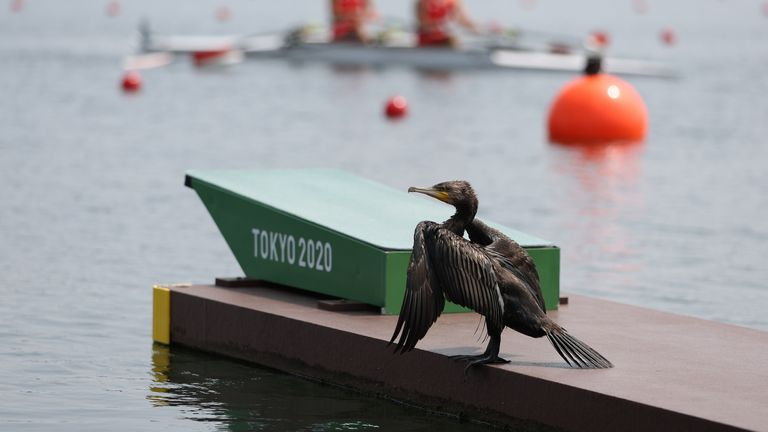 Tokyo 2020 Paralympic Games - Rowing - PR2 Mixed Double Sculls - PR2Mix2x Repechage 2 - Sea Forest Waterway, Tokyo, Japan - August 28, 2021. A bird looks on during competing REUTERS/Molly Darlington