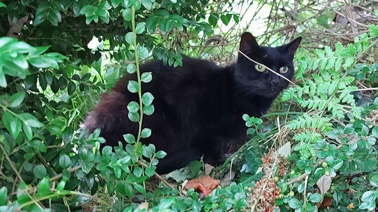 Piran the hero cat, who helped the rescue in Bodmin, Cornwall. Pic: Tamara Longmuir.
