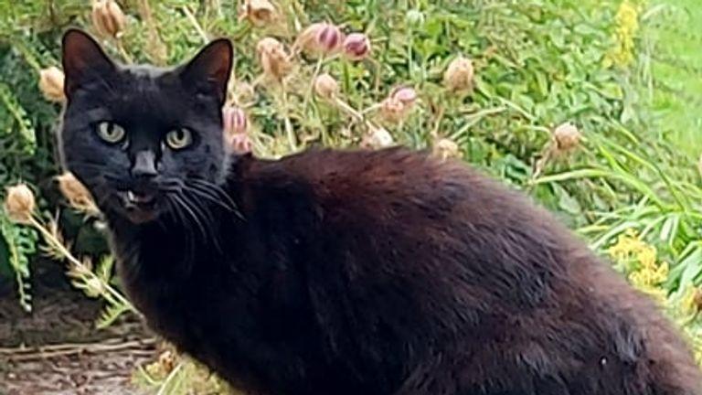 Piran the hero cat, who helped the rescue in Bodmin, Cornwall. Pic: Tamara Longmuir