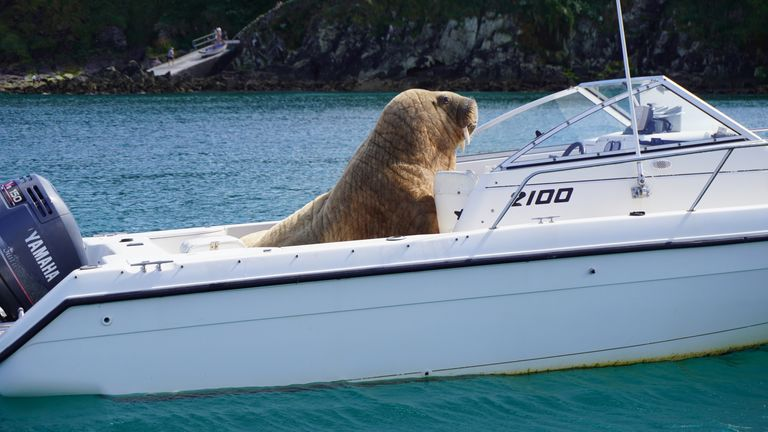 """Wally has """"hauled out"""" on a boat belonging to Clonakilty Distillery in West Cork. Pic: Clonakilty Distillery"""
