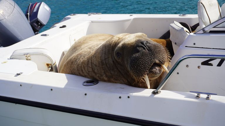 Seal Rescue Ireland has launched an appeal for a pontoon or other floating platform for Wally. Pic: Clonakilty Distillery