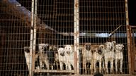 While the consumption of dogs has declined in recent years, an estimated two million dogs are reared on thousands of farms in South Korea a year