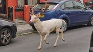 The stag was seen running down the middle of this road. Pic: Gareth Sullivan
