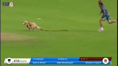 Dog stops play by picking up ball in T20 match