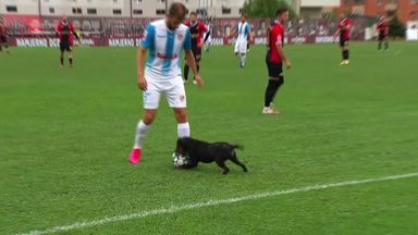 Dog steals ball and nutmegs players!