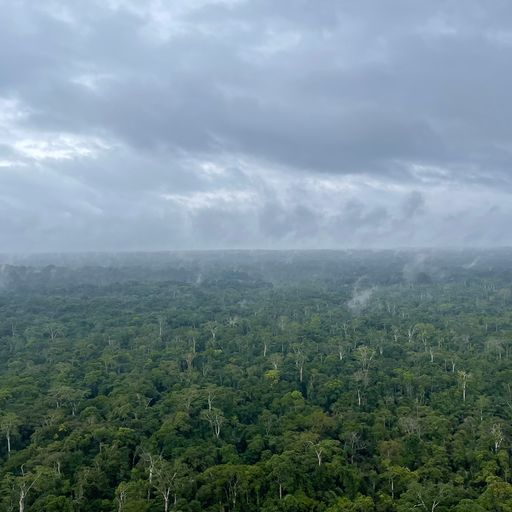 UK must suspend aid for Congo Basin rainforest protection until DRC drops plans to increase logging,
