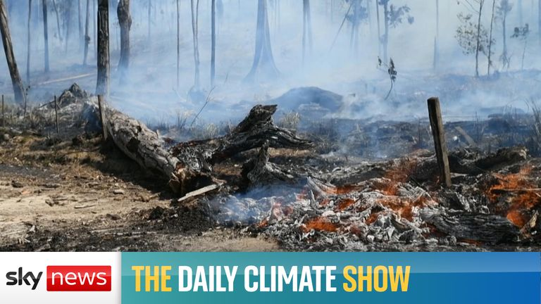 On the Daily Climate Show, we investigate who's behind industrial-scale deforestation in the Brazilian Amazon and why. Plus, the latest from the pre-COP26 youth event and our guests debate how Greta Thunberg has had such an impact on the world.