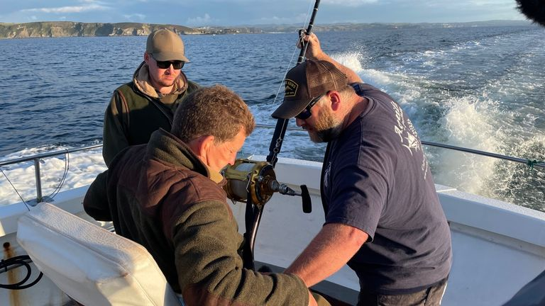 Skippers in Cornwall are working with The Centre for Environment, Fisheries and Aquaculture Science (CEFAS) to catch, tag and release the fish, which can grow up to 12 foot in length.