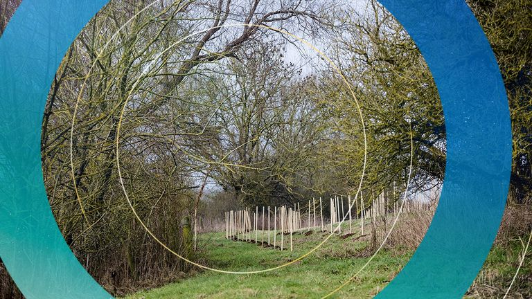 The funding will help another million trees go in the ground in the next year, the Woodland Trust says