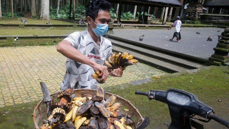 Le sanctuaire fournit généralement du manioc et des bananes aux singes, mais il a perdu des revenus à cause du manque de visiteurs.  Photo AP