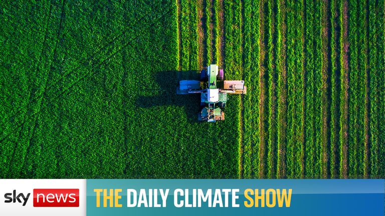 On the Daily Climate Show we are joined by climate justice activist Daze Aghaji and the director of the Conservative Environment Network, Sam Hall to discuss if Labour would be a good government for the environment. And is gene editing the answer to our agricultural needs as the planet gets warmer?