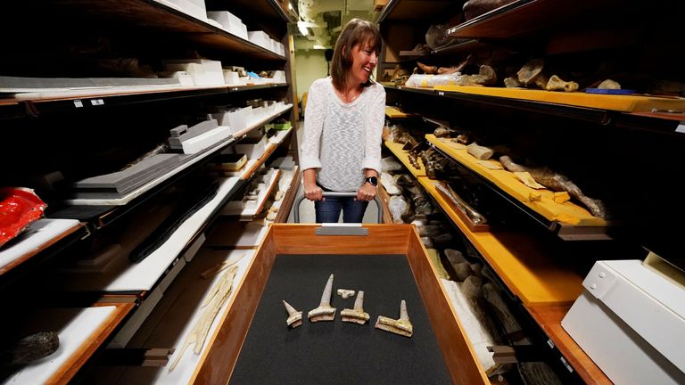 Dr Susannah Maidment said this discovery is around 165 million years old