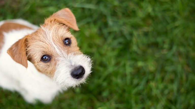 Scientists 51 dogs to see whether the animals show some elements of the theory of mind - the ability to recognise intentions in others