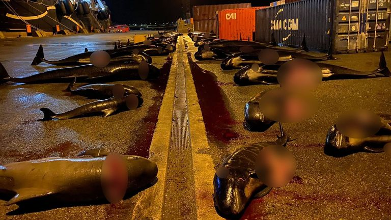"""Valentina Crast, an activist with campaign group Sea Shepherd, says the killings are""""inexcusable"""". Pic: Sea Shepherd UK"""