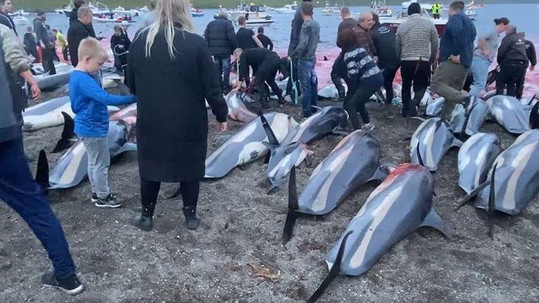 Young children were present at the hunt. Credit: Sea Shepherd Faroe Islands Campaign