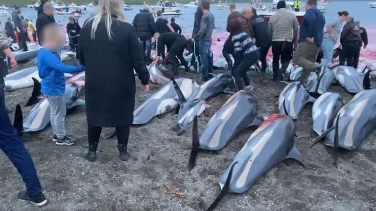 Pic: Sea Shepherd Faroe Islands Campaign