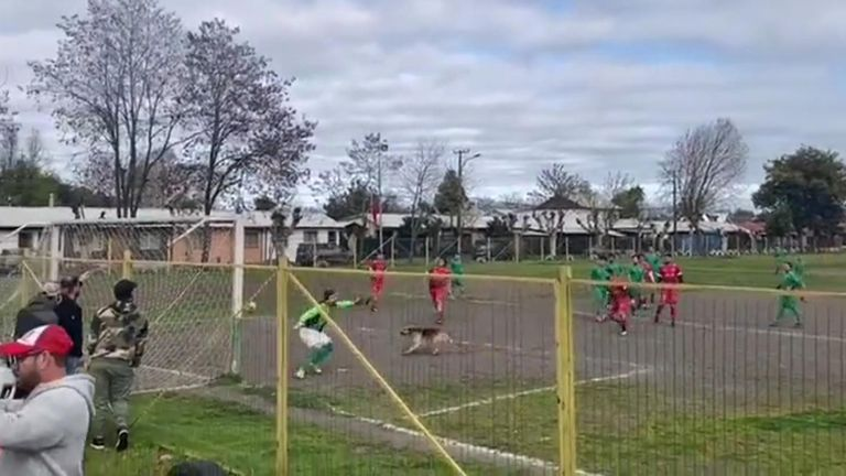 Dog scores in Chilean game