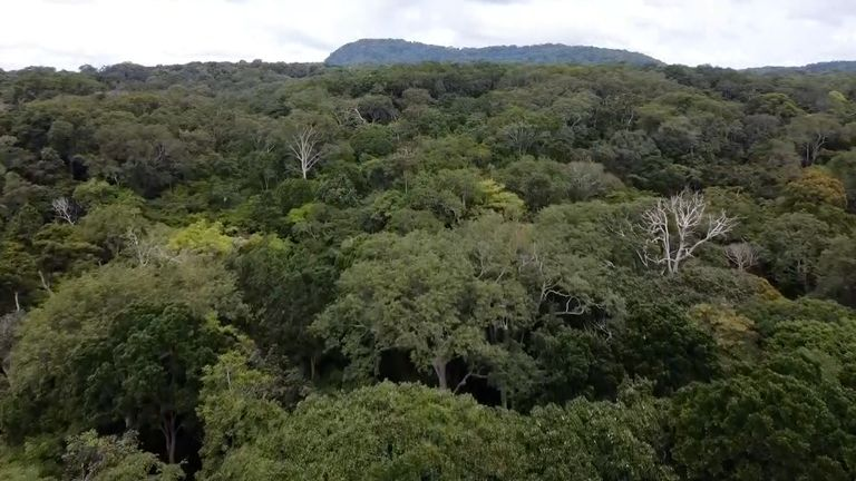 90% of Gabon is covered in forest