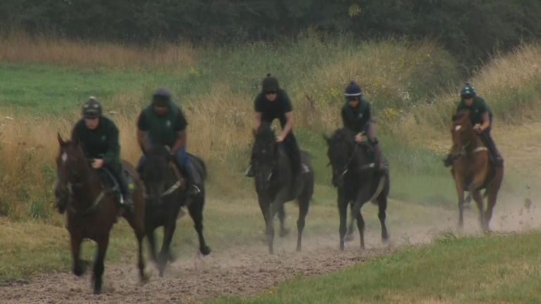 People can book slots online to visit their local stables and see the operation first-hand