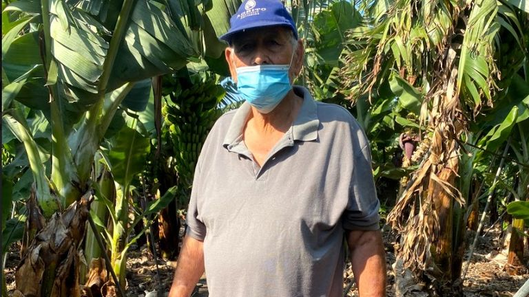 Volcanic dust is damaging the 'plátano' skin leaving farmers including Mr de Paz Perez fearing they won't be able to sell their produce to supermarkets.