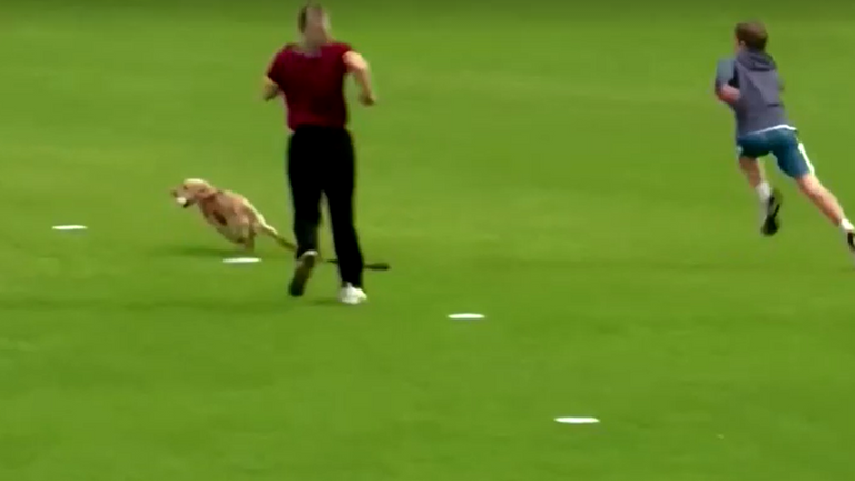 Pitch-invading puppy fields cricket ball and gives players the slip