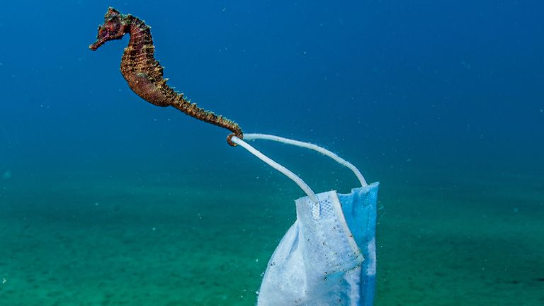 This picture of a seahorse clinging to a face mask, taken in Greece's Stratoni won the Conservation Photographer of the Year Award. Pic: Nicholas Samaras/Ocean Photography Awards