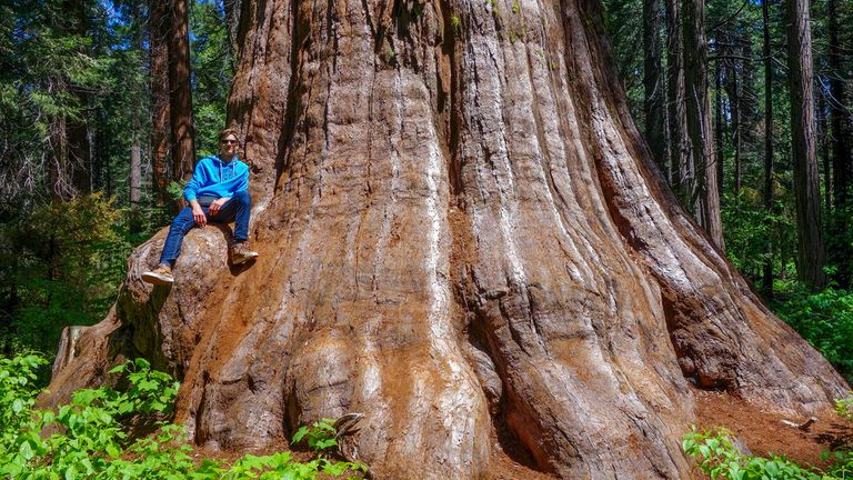 Sequoia National Park in California is known for its giant sequoias.  Photo: AP.