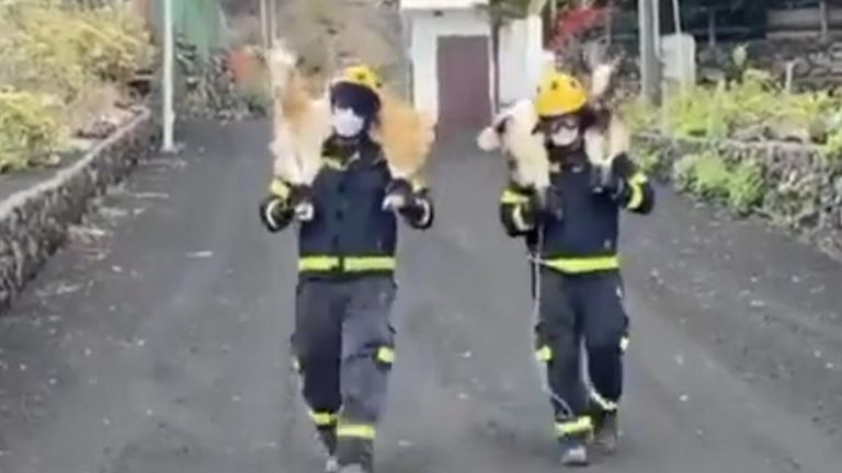 Firefighters rescued two goats in La Palma, one of Spain's Canary Islands, on September 20, after a volcano erupted the day prior.