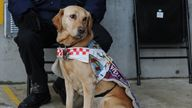 Dr Amy Kavanagh said that her guide dog, Ava, is regularly distracted when she is working