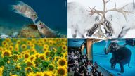Clockwise from top left, photographs by Angel Fitor/ Stefano Unterthiner/ Adam Oswell/ Andrés Luis Dominguez Blanco - all Wildlife Photographer Of The Year 2021 category winners