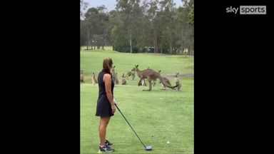 'What's going on?' Kangaroos invade golf course
