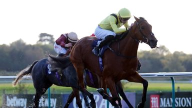 Maamora bows out in style at Lingfield